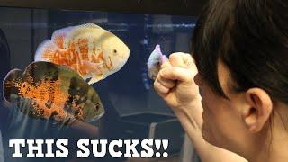 The 10 Worst Things About Aquariums