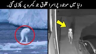 10 Mysterious Creatures Caught on Camera | TOP X TV