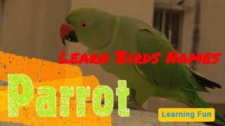 Top 10 Birds for Play School  Birds Names with Pictures for Nursery Kids   शीर्ष 10 पक्षियों के नाम
