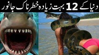 TOP 10 Biggest Animal In the World || Most Dangerous Animal in the world Urdu/Hindi