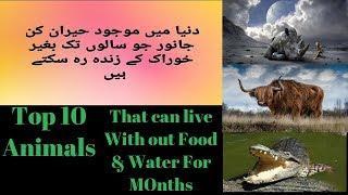 Top 10 Animals that live without food for months  ایسے جانور جو بغیرخوراک مہینوں تک زندہ رہ سکتے ہیں