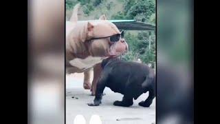 Funny video 2020    Latest Video    Hit Video    Super Video    Top Funny Video 2020