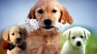 TOP 10 FRIENDLY DOGS FOR YOUR FAMILY