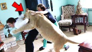Top 5 UNBELIEVABLE MOMENTS You Would NOT Believe If They Weren't Recorded!