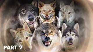 TOP 10 WOLFIEST DOGS IN THE WORLD - PART 2 - DOGS THAT LOOK LIKE WOLVES