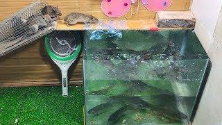 Cara membuat perangkap tikus dengan wadah gelas air sangat efektif / Top 10 perangkap tikus elektrik
