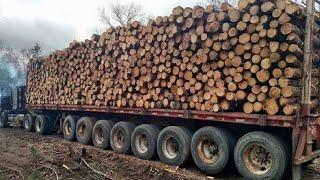 10 Amazing Dangerous Idiots Biggest Logging Wood Truck Fastest MAXIMUM Heavy Equipment Working
