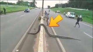 Top 10 Dangerous And Poisonous Snake In The World By Amazing Facts
