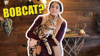 Wild Backyard Cat Enters our House!