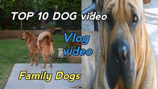 Top 10 Dogs   Sheersh 10 Kutte Vlog Video   Family Dog