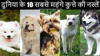 दुनिया के 10 सबसे महंगे कुत्ते की नस्लें | Top 10 Most Expensive Dog Breeds In The World 2020