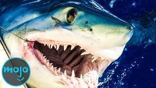 Top 10 Scariest Shark Species