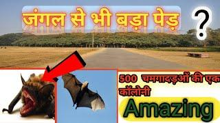 Top 21 Fact । Top 10 Facts। Amazing  Facts of World। By Fact With Panchal