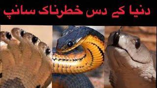 #Information || Top 10 dangerous snake in the world || dunia k kahtarnak saanp