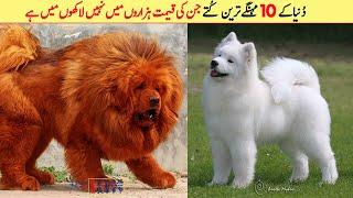 Top 10 Most Expensive Dog Breeds In The World 2020 | دُنیا کے 10 مہنگے ترین کُتے