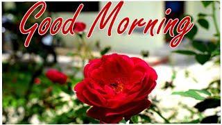 Good Morning Whatsaap Status | Good Morning Status | Good Morning Video | Good Morning Status