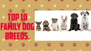 Top 10 Family Dog Breeds || Best dog for family || Loyal Dogs for family..