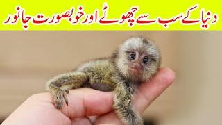 Top 10 Smallest Animals in the world Complete Information in Urdu Top Ten Smallest Animals in Urdu