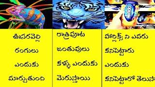 Top 10 Interesting Unknown Facts Telugu | Amazing Facts Telugu | Real Facts | Telugu badi