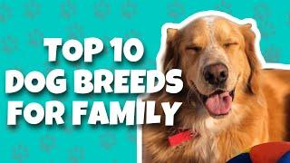 Top 10 Dog Breeds For Family With Kids (2020) | TOP 10 Friendly Dog Breeds  | Dogs As Art
