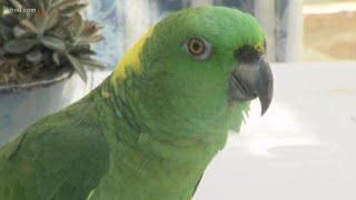 Police called after Florida parrot's 'help me' chants