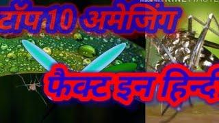 Amazing top 10  fact mosquito in Hindi