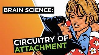 Brain in love: The science of attachment in relationships | Helen Fisher