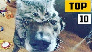 Top 10 of the Week Funny Cat Videos October 2016 #1 Cats Compilation || NEW HD
