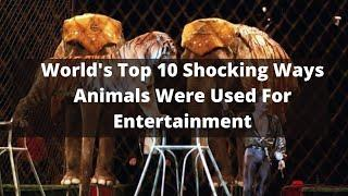 World's Top 10 Shocking Ways Animals Were Used For Entertainment