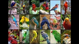 Top 10 Beautifull birds in the world.
