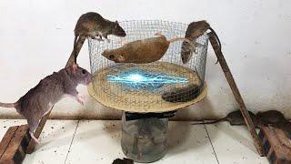 [New]Membuat perangkap tikus mudah | Beste Ideen für Rattenfallen | Top 10 piège à souris électrique