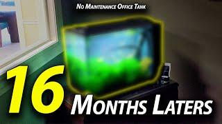 No Maintenance for 16 months Update - Fluval Spec 16 Gallon Office Aquarium