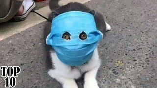 Top 10 Funniest Cat Videos | Try Not To Laugh Challenge - Part 2