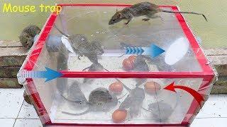 Membuat perangkap tikus mudah | Beste Ideen für Rattenfallen | Top 10 piège à souris électrique #3