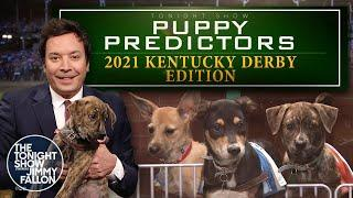 Puppies Predict the 2021 Kentucky Derby | The Tonight Show Starring Jimmy Fallon