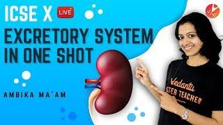 Excretory System in One Shot | Structure of the Kidney | ICSE Class 10 Biology Science | Vedantu