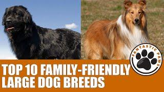 TOP 10 FAMILY FRIENDLY LARGE DOG BREEDS