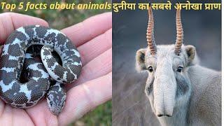 Animal Facts You Didn't Know In Hindi 2021 | Top 5 Facts | Interesting information about animals.