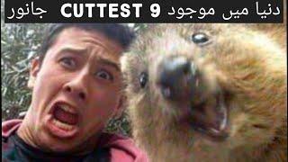 Top 9 cuttest baby animals in the world|information|animals|Abdul mohiz world