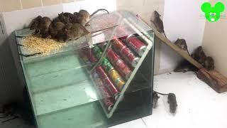 Perangkap tikus air | Cara membuat perangkap tikus dengan wadah kaca air | Top 10 Perangkap tikus