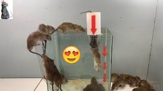 Top 10 best electric mouse trap / mouse trap 2020 / Best idea for mouse trap