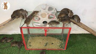 amazing idea - Membuat perangkap tikus mudah | | Top 10 piège à souris électrique - BLACK MOUSE