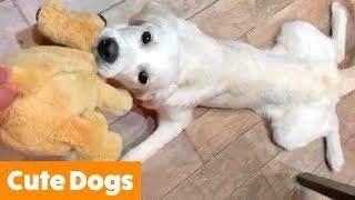 Adorable Dog Bloopers   Funny Pet Videos