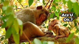 Alba Is Very Lovey Baby Monkey She Always Share Her To Anna |My Angel Alba Try Ask Anna What Happen