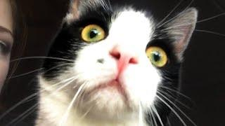 CUTE AND FUNNY CAT VIDEOS TO START YOUR 2020!