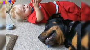 Top 10 Best Of Cute RottWeiler And Babies Playing Videos Compilation - Funny Dog And Baby Videos