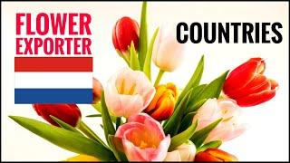 Top 10 World's Flower Exporter Countries | Flower  Producing | Simple Hut TV