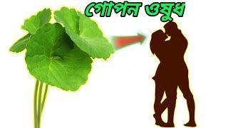 অলৌকিক পাতার বিস্ময়কর ভেষজ উপকারিতা। কুটি টাকার ঔষধ । health benefits bangla