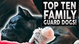 Top 10 FAMILY Guard Dog Breeds 2020!