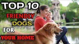 TOP 10 FRIENDLY DOGS BREED FOR YOUR HOME |Dog Information |Popular Dog's|10 Friendly Dog Breed|
